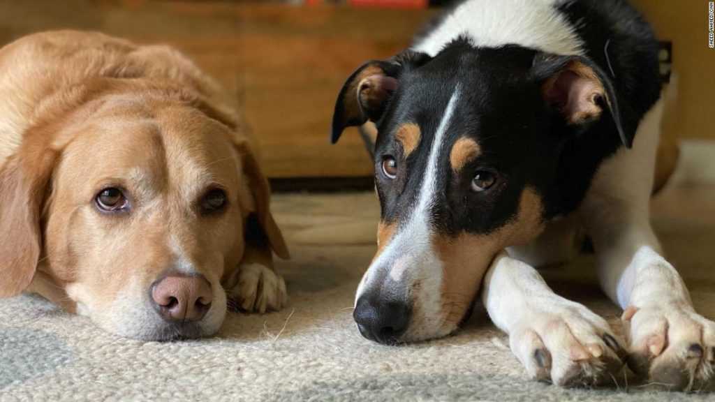 Nationwide Pet Day: How one can put together your pets for again to work